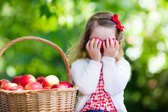 Little girl picking apples Royalty Free Stock Photography