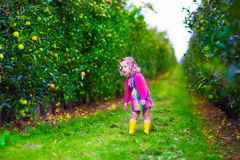 Little girl picking apples on a farm Stock Photography
