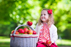 Little girl picking apples in fruit orchard Stock Photography