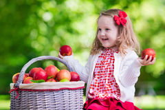 Little girl picking apples in fruit orchard Stock Photo
