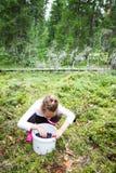 Little girl picking blueberries in summer forest stock photo