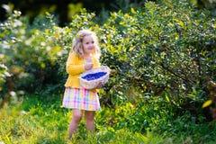 Little girl picking blueberry in the garden Stock Photography
