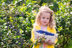 Little girl picking blueberry in the garden Royalty Free Stock Photos