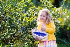 Little girl picking blueberry in the garden Stock Photo
