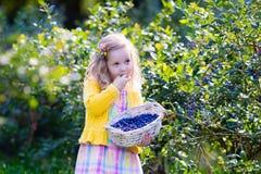 Little girl picking blueberry Stock Photography
