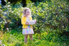 Little girl picking blueberry Stock Photos