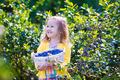 Little girl picking blueberry Stock Images