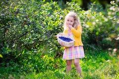 Little girl picking blueberry Stock Photo