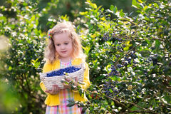 Little girl picking blueberry Royalty Free Stock Images