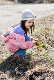 Little girl picking bunch of small yellow flowers Royalty Free Stock Photography