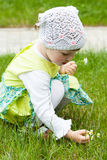 Little girl picking camomiles Stock Images