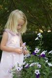 Little girl picking flowers. Happy little girl Stock Images