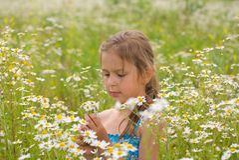 Little Girl Picking Flowers Royalty Free Stock Photo