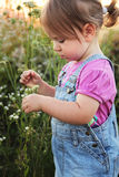 Little girl picking flowers. Cute little girl picking flowers in the sunshine. (1-2 years old Royalty Free Stock Image