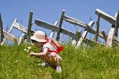 Little girl picking flowers. In a meadow Stock Photos
