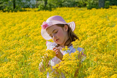 Little Girl Picking Flowers. Girl in Dress in a Field of Flowers Royalty Free Stock Image