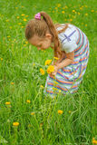 Little girl picking flowers. Beautiful little girl picking flowers in summer green park Stock Photo
