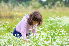 Little girl picking flowers. In the field Royalty Free Stock Photography