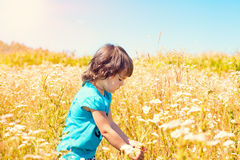 Little girl picking flowers. In the meadow Royalty Free Stock Image