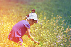 Little girl picking flowers. In the meadow Royalty Free Stock Images