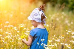 Little girl picking flowers on the meadow Stock Images