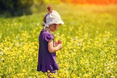 Little girl picking flowers. In the meadow in sunny day stock photos