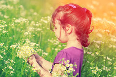 Little girl picking flowers in the meadow. In sunny day Royalty Free Stock Photos