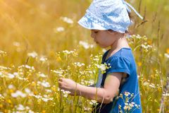 Little girl picking flowers in the meadow Royalty Free Stock Images