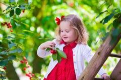 Little girl picking fresh cherry berry in the garden Royalty Free Stock Photo