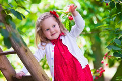 Little girl picking fresh cherry berry in the garden Royalty Free Stock Photography