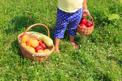 Little girl picking harvest of fruits and vegetables in summer. stock photos