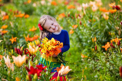 Little girl picking lilly flowers. Cute little girl picking lily flowers in blooming summer garden. Child holding lilies bouquet in beautiful flower field. Kid Royalty Free Stock Photos