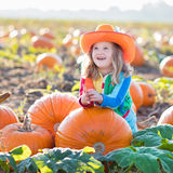 Child playing on pumpkin patch. Little girl picking pumpkins on Halloween pumpkin patch. Child playing in field of squash. Kids pick ripe vegetables on a farm in Royalty Free Stock Images