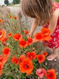 Little girl picking roadside poppies royalty free stock image