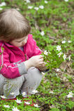 Little girl picking snowdrops Stock Photos