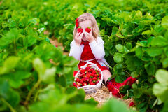 Little girl picking strawberry on a farm field Stock Image