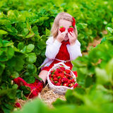 Little girl picking strawberry on a farm field Royalty Free Stock Images