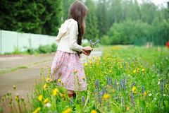 Little girl picking up summer flowers Royalty Free Stock Photo