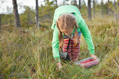 Little girl picking wild cranberries Royalty Free Stock Images