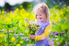 Little girl picking wild flowers in a field Royalty Free Stock Images