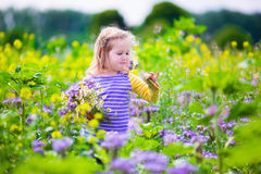 Little girl picking wild flowers in a field Stock Photography