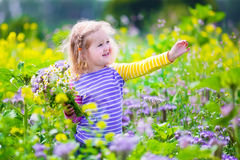 Little girl picking wild flowers in a field Royalty Free Stock Image