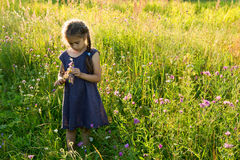 Little girl picking wild flowers on a field. Little girl picking wild flowers on a summer field Royalty Free Stock Photos