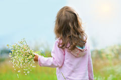Little girl picking wild flowers Stock Image