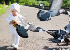 Little girl and pigeons Stock Photos