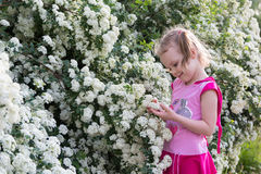 Little girl with pigtails admires bush with white flowers Stock Image