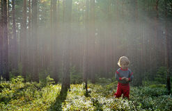 Little girl in pine forest at Summer Stock Images