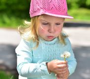 Dandelions.Little girl blowing on a dandelion. Little girl in a pink cap,blowing a dandelion which is held in his hands Stock Photography