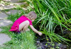 Little girl  reaching to touch frog. A little girl in pink, reaches to touch a small frog in a pond. exploring nature is fun Royalty Free Stock Photos