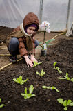 Little girl planting lettuce seedling Royalty Free Stock Image